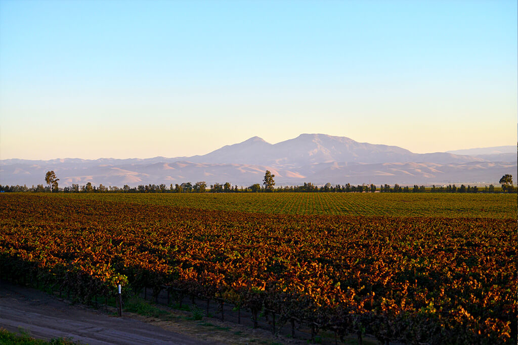 Scheid vineyard with mountains in the background